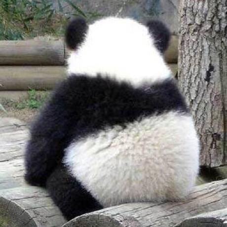 panda-sheep